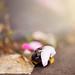 A bee hug and a kiss by AnaRocha