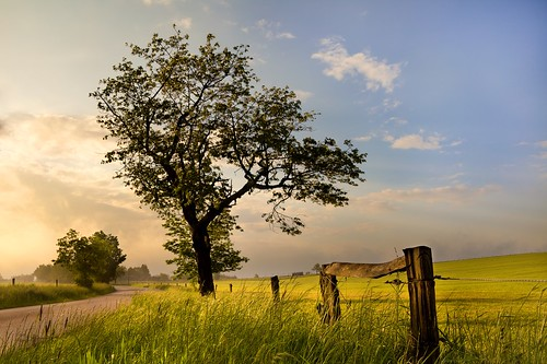 fog trees tree sunrise sunlight sun summer spring sky season scene rural road pasture nature meadow lawn landscapes landscape land idyllic growth green grass field farm country color cloudy cloudscape cloud blue beauty background