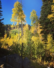 Getting ready to hike up into this magical Aspen Forest, feel so lucky to be able to witness these golden beauties