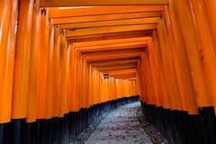 Fushimi Inari Taisha XXI