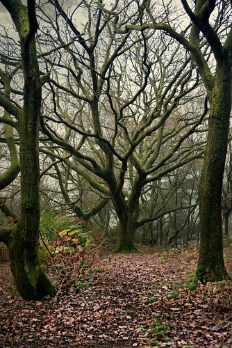 tree cheshire witchy bosley congleton thecloud timbersbrook