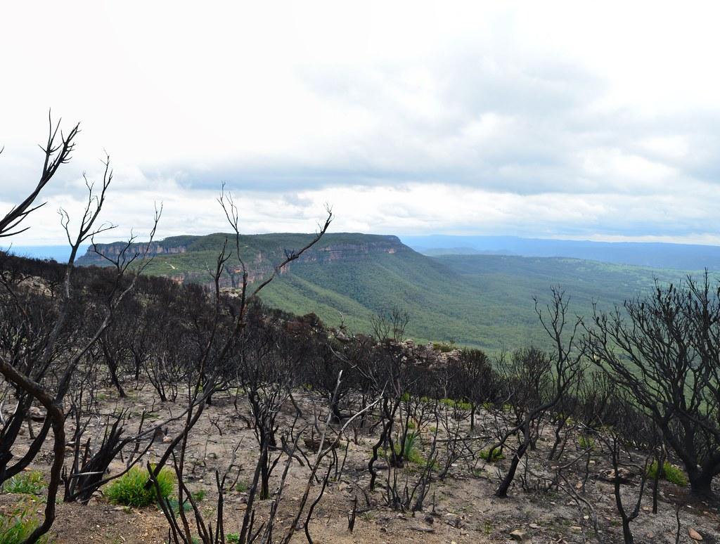 Regeneration begins near Cahills Lookout - Blue Mountains