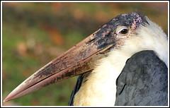 Mr. Beak