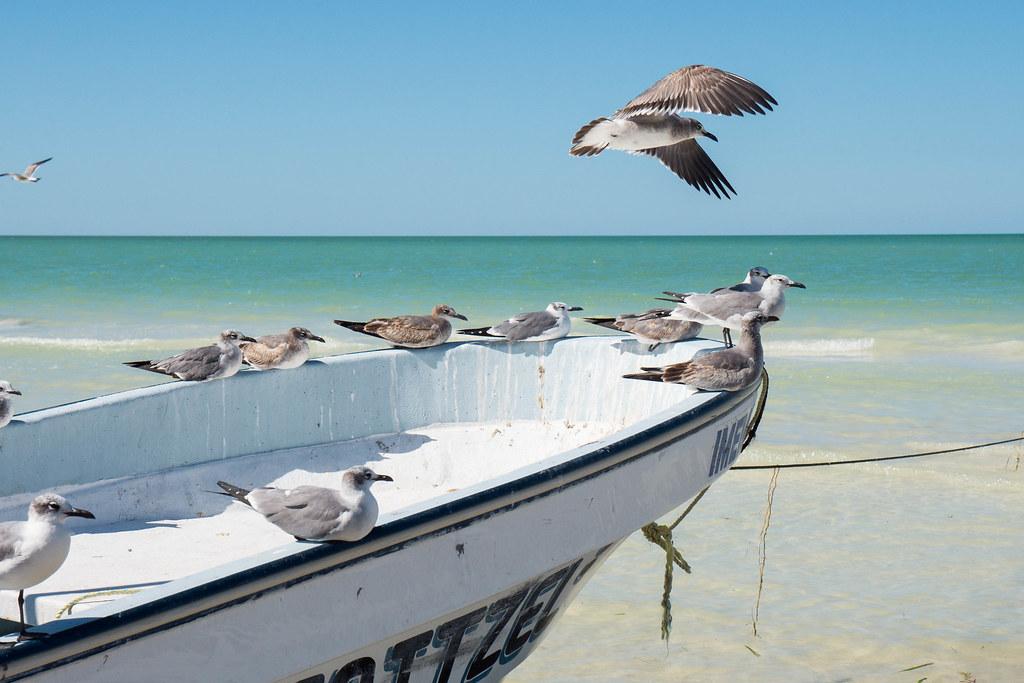 Isla Holbox Main Beach Seagulls on a boat-2.jpg