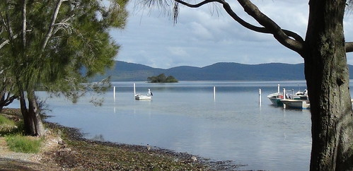 Moored boats pelican & terns on Wallis Lake, NSW
