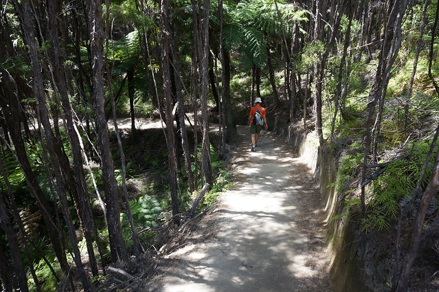 Hiking the Abel Tasman Walkway