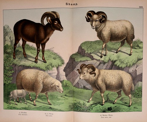 005-Natural history of the animal kingdom for the use of young people..- 1889-William Forsell Kirby