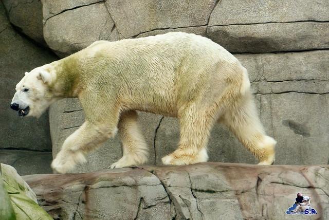 Tierpark Hagenbeck 2.01.2015 48