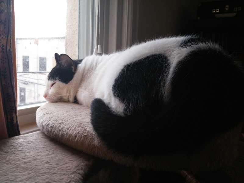The Cat Life - Lloyd Love