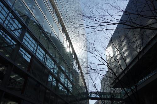 """Tokyo_27 東京都丸の内の """"東京国際フォーラム"""" の写真。 ガラス張りの壁面と空中通路と落葉した樹木が画像に写っている。 ガラス面からの反射光が向かい側の建物の壁を鱗状に照らしている。"""