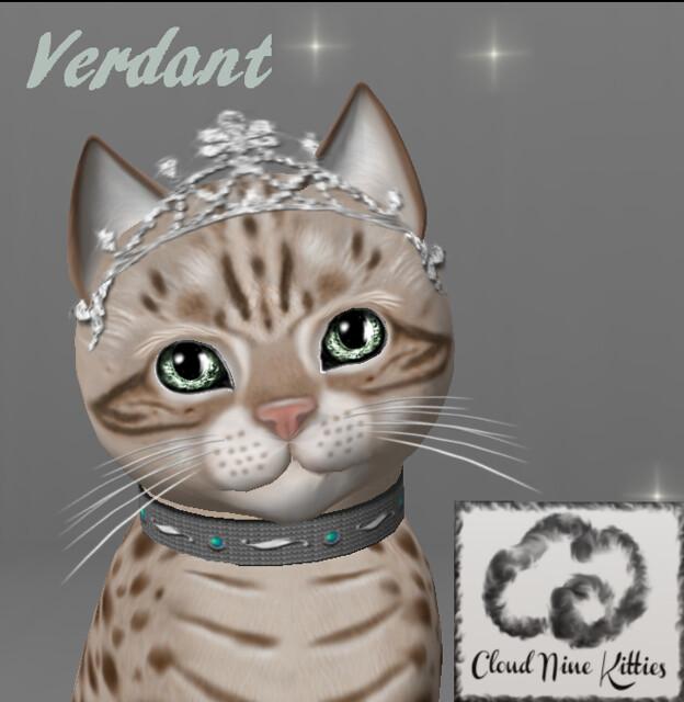 kittycats forum