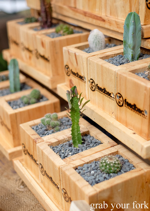 Cactus planter boxes by Feedback Organic Recovery at Brewery Yard Markets