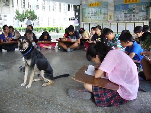 「超仁」跟學生們一起上課;圖片提供:大仁國中。