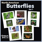 Free Butterfly Flash Cards (set 1)