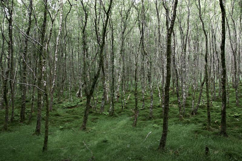 woods of glendalough