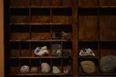 Fossil collectors collection