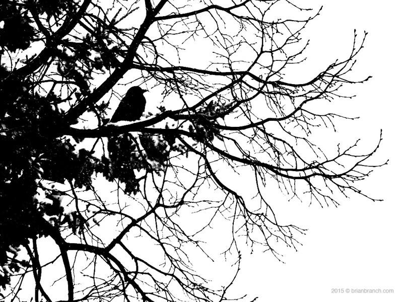 DSCN9566_crow
