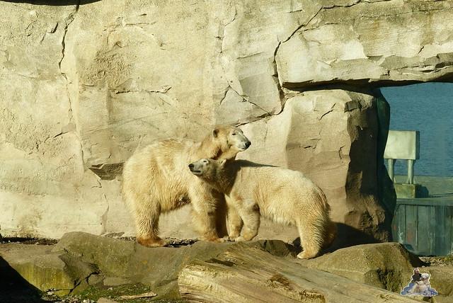 Zoo am Meer 08.03.2015  12