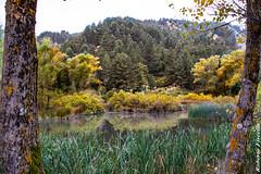 Riflessi d'autunno...