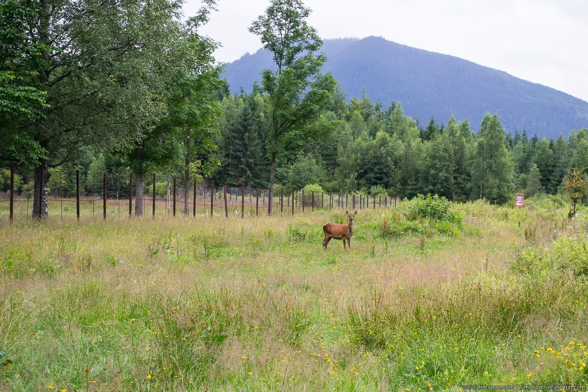 Ферма Зубров в Горах