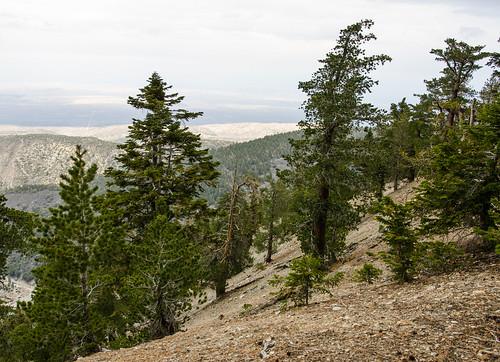 Mount Baden-Powell