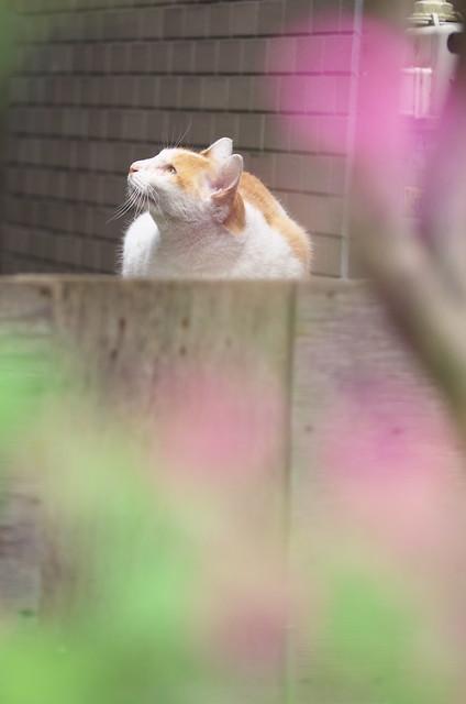 東京路地裏散歩 谷中のネコ 2014年11月3日