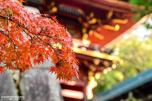 world travel summer travelling japan japanese ancient view culture buddhism best 日本 nippon tradition shinto japon nihon japani 2014 japón 일본 honshu shintoism 2015 本州 nikond610
