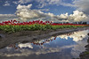 Reds Reflected in Long Puddle, Skagit Valley