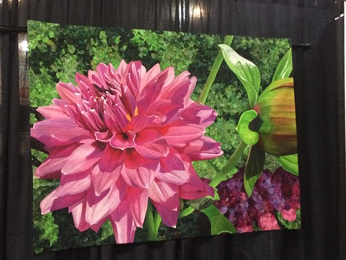 """Dazzling Dahlia"" by Andrea Brokenshire of Round Rock, TX"