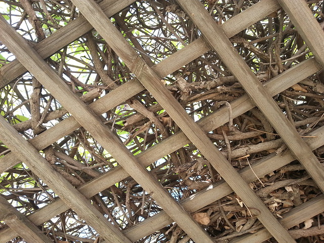 Trellis definition meaning for What does pergola mean