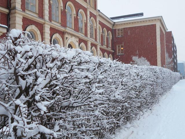 Luminen maisema Lyseolla Hämeenlinnassa 2.2.2015