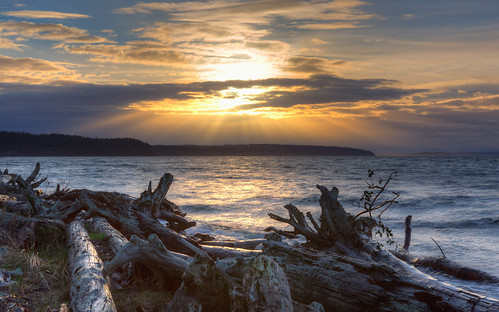 morning nature water clouds sunrise landscape outdoors scenic logs shore pacificnorthwest washingtonstate canonef2470mmf28lusm camanoislandstatepark canoneos5dmarkiii