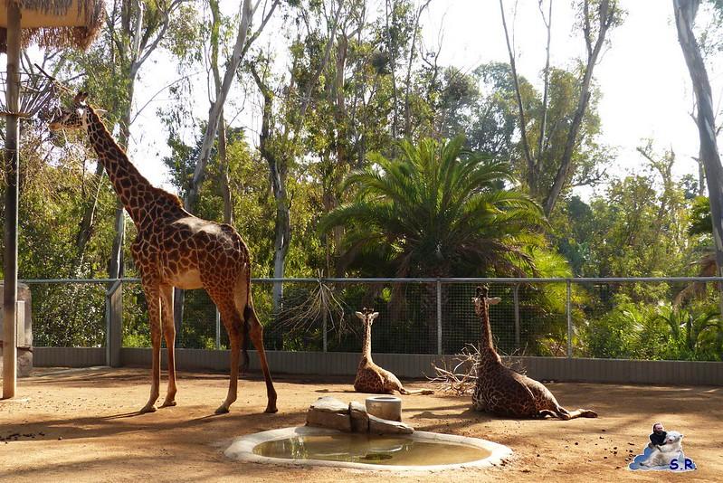 San Diego Zoo 10.11.2014 29