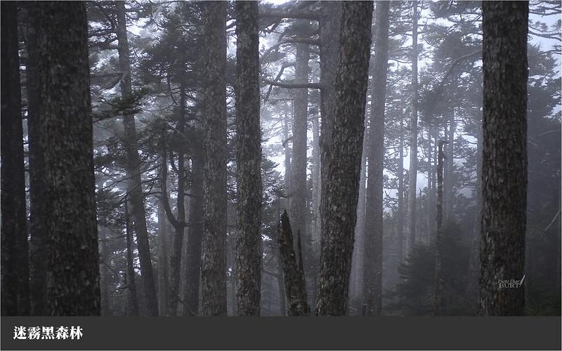迷霧黑森林