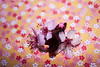 Cherry Blossom Edited