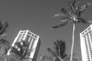 Waikiki Beach - Hotels trees