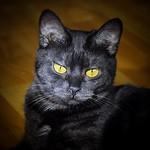 Jessica . #cat #cats #catsofinstagram #instacat #gato #neko #katze #猫 #고양이 #purrfect #rescuecat #catseyes #topcatphoto #cats_presidency #a_world_of_cats #excellent_cats #thecatawards #ig_catclub #ptk_pets #bns_cats #best_cats #world_kawaii_cat #cat_featur