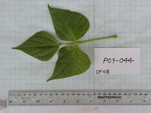 P09-044 CF03 L