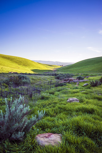 california winter shadow green grass spring sony hills livermore a7 hollingsworth a7ii stephenhollingsworth sonya7ii