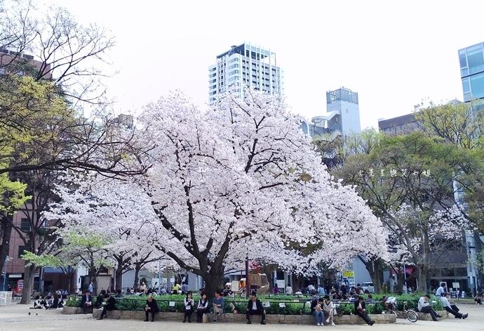 7 大阪賞櫻景點 堀江公園 味處和風亭