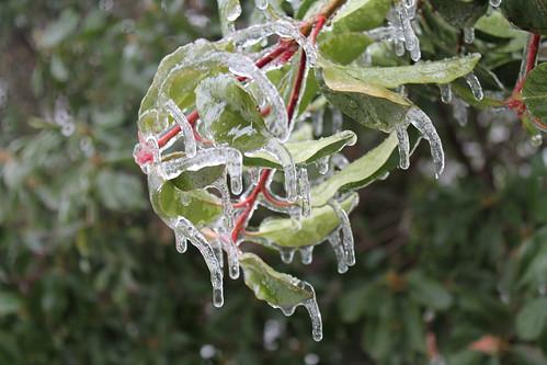 ice storm in Nashville