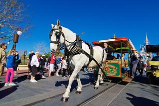 Magic Kingdom Trolley