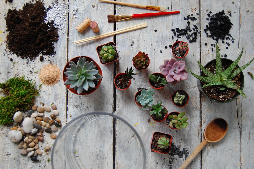 DIY Terrarium Materials