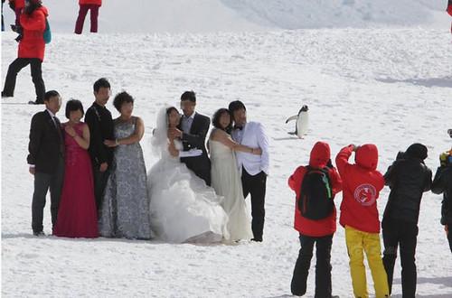 南極でウェディング撮影がブーム