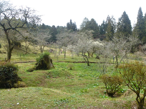 Ta-Alishan-Parc-Marche (73)
