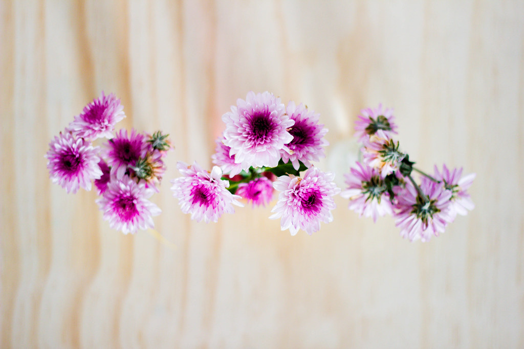 FlowerExperiment-Day3-IMG_2729