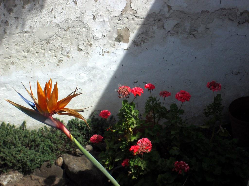 El jardín de la casa