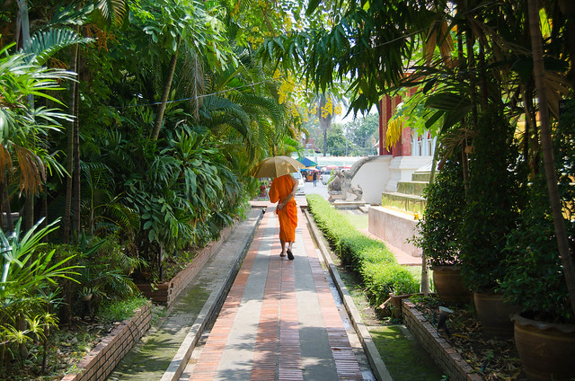 Monk in a pathway