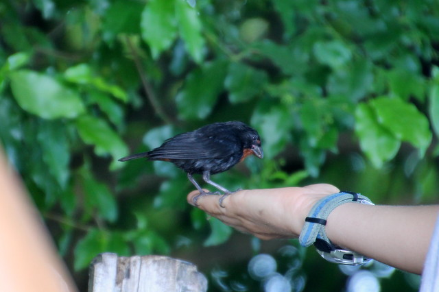 Bird in the Hand, Gros Piton Hike, St Lucia