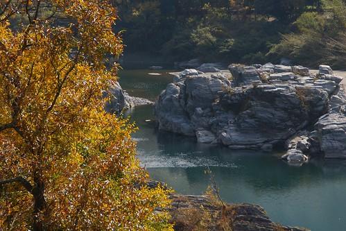 nature japan autumncolors 紅葉 秋 黄色 もみじ 赤 秋色 徳島県 20141130dsc01668 吉野川ハイウェーオアシス